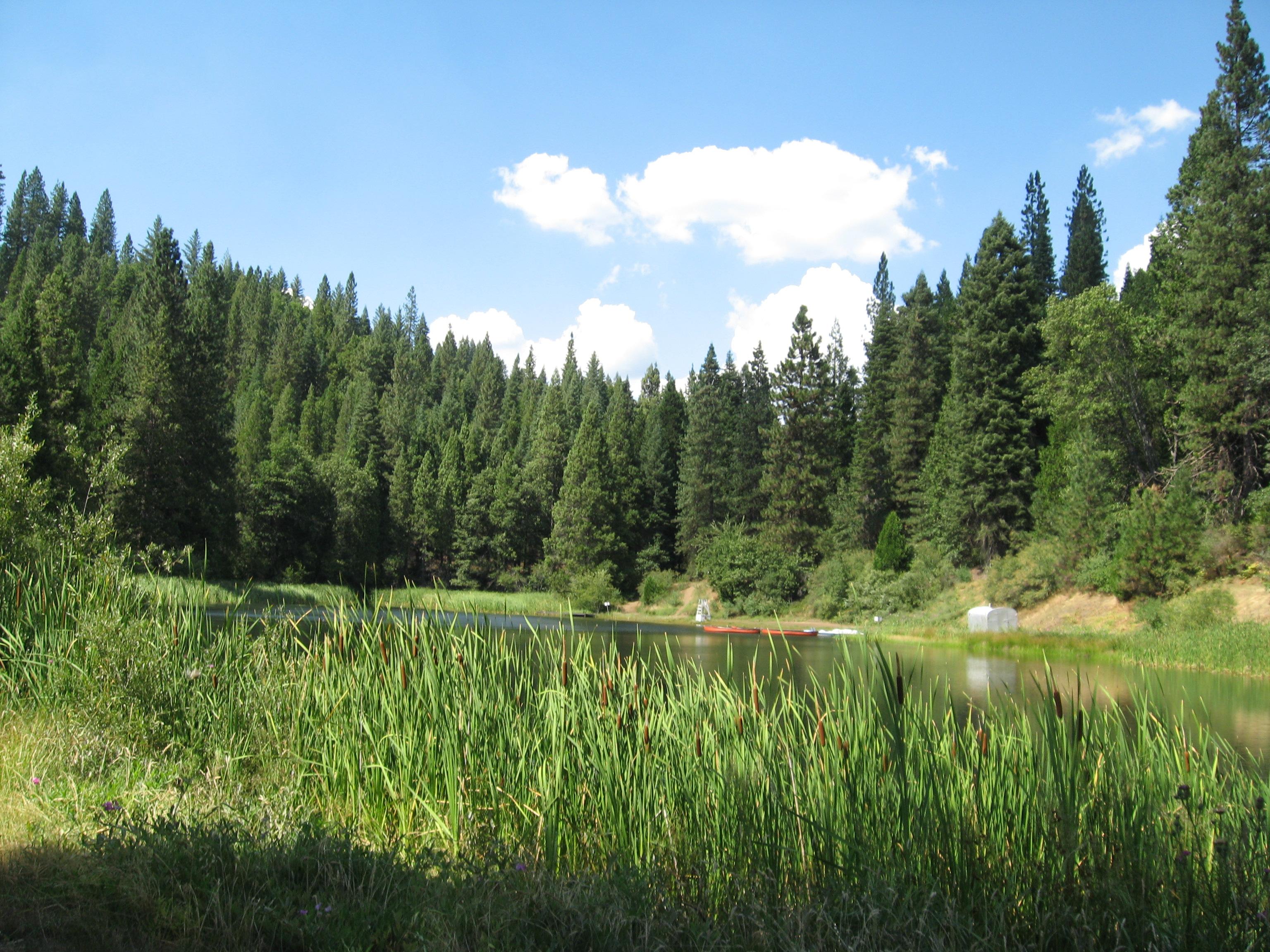 Bosque de pino radiata